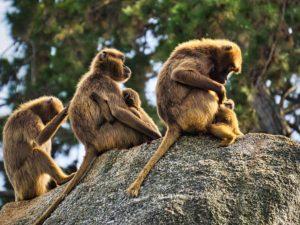 Säugetierweibchen bei der natürlichen Hege und Pflege