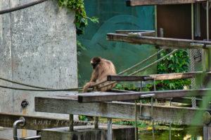 Tier im Stuttgarter Zoo
