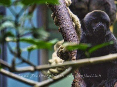 Affe im Irrenhaus