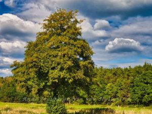 Der kahle Baum im September