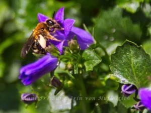 Ausgestorbene Biene