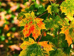Leckere Herbstblätter