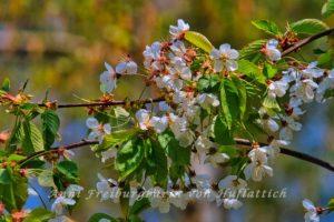 Verblühende Blüten