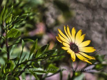 Wundersame Blüte