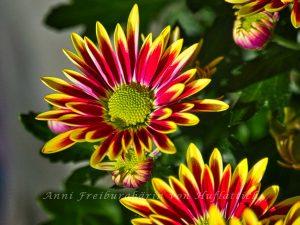 Eine schöne Topfpflanze