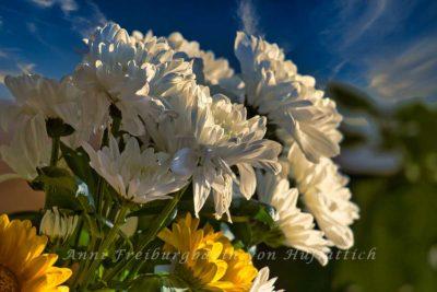Chrysanthemen und Gerbera