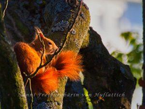 Eichhörnchen vorm Balkon