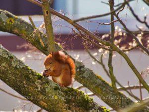 Eichhörnchen in Sommerrain