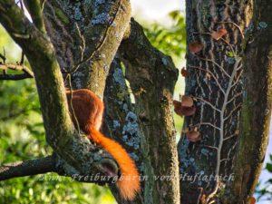 Gut getarntes Eichhörnchen