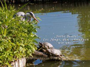 Reiher und Schildkröten im Rosensteinpark