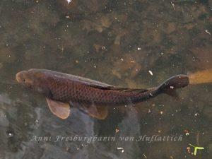 Fisch am frühen Morgen.
