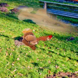 Frühlingserwachen im Rosensteinpark. Ungeziefer kriecht aus den Löchern
