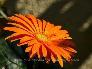 Die Blüte ganz, voll beschienen