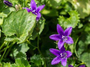 Einzelne Blüten