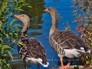 Vogelfluganalysten im Rosensteinpark