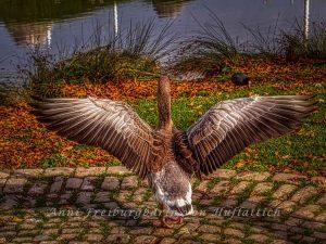 Die Bundesgans im Rosensteinpark ersetzt den Adler