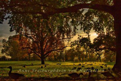 Herbst im Rosensteinpark