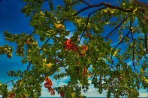 Herbstlich bunt