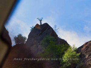 Hirsch beim Hirschsprung mit Autodach und Moire-Effekt