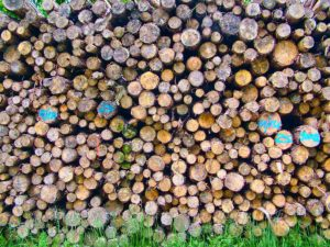 Noch ein Holzstapel (Nahaufnahme)