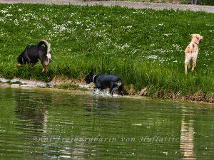 Freilaufende Köter im Rosensteinpark