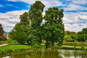 Kastanien im Rosensteinpark