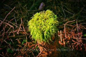 Moos auf Baumstumpf