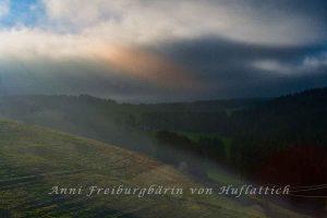 Morgendämmerung im Schwarzwald mit Nebel