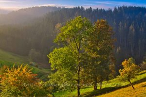Morgendämmerung im Schwarzwald