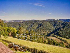 Harzer Roller im Schwarzwald