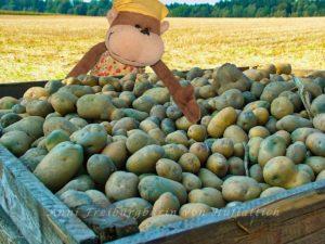 Der Pommesbauer ist zufrieden