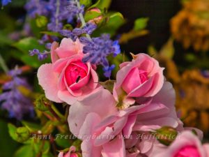 Rosen im Rosensteinpark