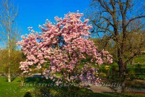 Der Rosensteinpark, bonbonfarben verklärt