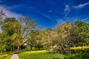 Marienblauer Himmel im Rosensteinpark