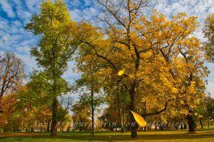Rosensteinpark - Die Blätter fallen
