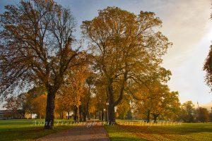 Der Rosensteinpark