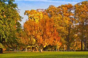 Entgrünter Baum im Rosensteinpark