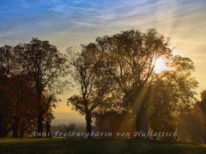 Sonniger Sonnenaufgang im Rosensteinpark