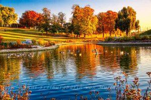 Teich im Rosensteinpark