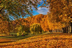 Sonnenstrahlen tauchen den Rosensteinpark in goldenes Licht