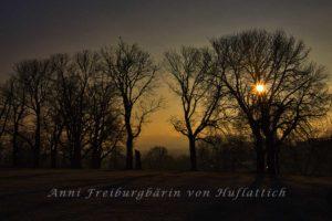 Rosensteinpark im Morgenlicht