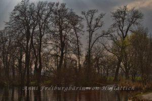 Düstergrau im Rosensteinpark