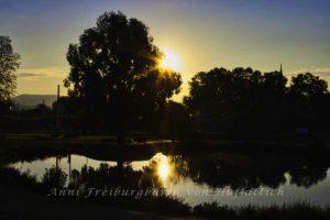 Morgendämmerung im Rosensteinpark