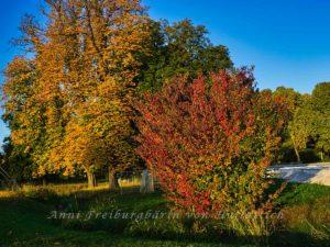 Rot, gelb, grüner Rosensteinpark