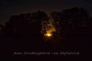 Rosensteinpark im Dämmerlicht
