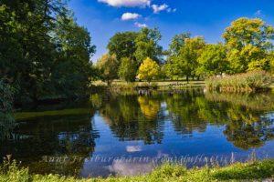 Still ruht der Rosensteinparkteich in herbstlicher Sonne