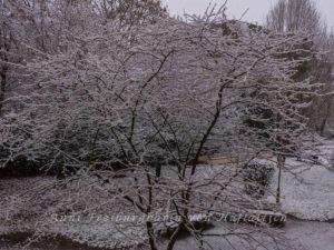 Schneekatastrhophe in Sommerrain