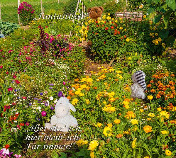Im September blühen Bauerngärten auf