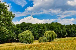 Der Sommer hält Einzug im Rosensteinpark