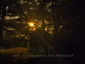 Sonnenaufgang im Rosensteinpark
